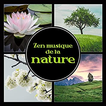 Zen musique de la nature - Musique relaxante avec vagues océaniques, pluie, chutes d'eau et chants d'animaux