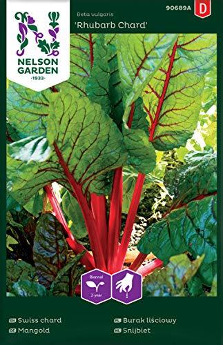 Mangold Samen Rhubarb Chard - Nelson Garden Gemüse Saatgut - Gartensamen Mangold (150 Stück) (Einzelpackung)