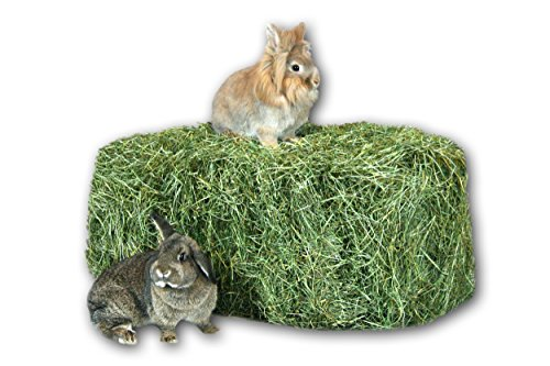 Heu 2. Schnitt Grummet 15kg Futter Kaninchen Meerschweinchen Hase Deko Heu Scheune