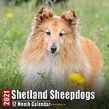 Calendar 2021 Shetland Sheepdogs: Cute Shetland Sheepdog Photos Monthly Mini Calendar With Inspirational Quotes each Month