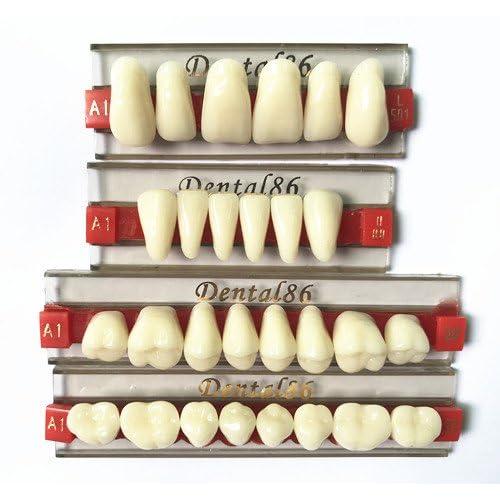 Acrylic Teeth: Amazon com