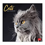 Legami - Calendario da Parete 2022, 30x29cm, Cats