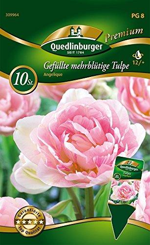 Quedlinburger 309964 Gefüllte mehrblütige Tulpe Angelique (10 Stück) (Tulpenzwiebeln)