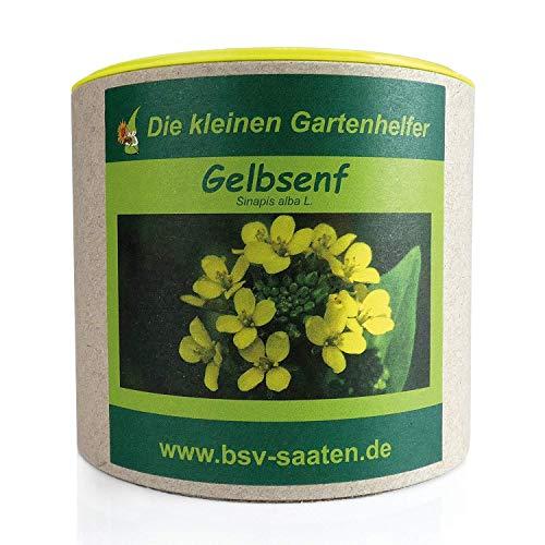 Keimsamen Gelbsenf 250g I Samen zur Bodenverbesserung I Zertifiziertes Saatgut zur Grunddüngung I Gelbsenf Samen für 100m²