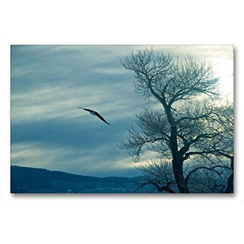 CALVENDO Premium Textil-Leinwand 90 x 60 cm Quer-Format Adler über Nord-Dakota, Leinwanddruck von Marianne Drews