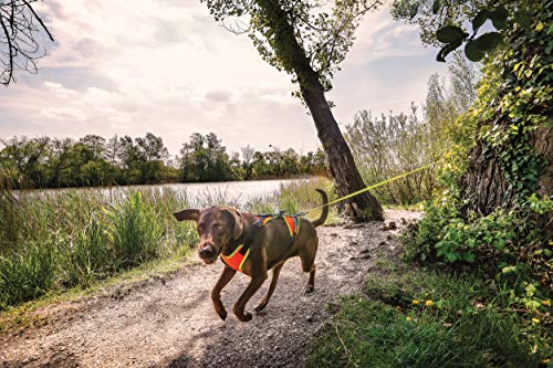 Julius-K9 16MTR-for-L-XL Mantrailing & Outdoor Hundegeschirr, Größe: L-XL, UV orange mit neon Rand