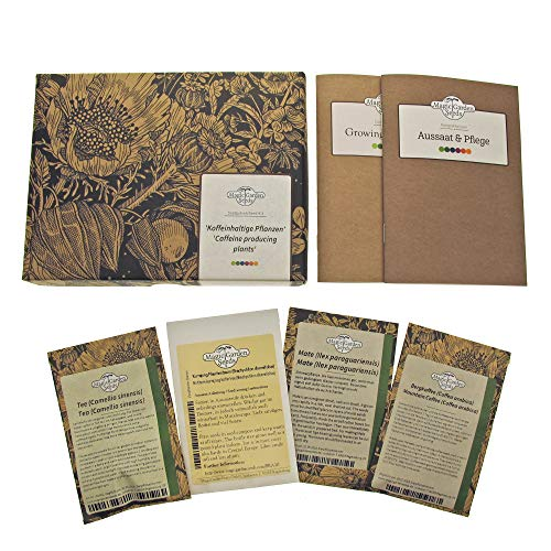 Koffeinhaltige Pflanzen - Samen-Geschenkset mit 4 speziellen Nutzpflanzensorten: Tee, Kaffee, Mate & Kurrajong