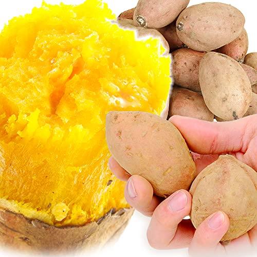 国華園 さつまいも 種子島産 安納芋【極ちび】 10�s ご家庭用 食品