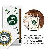 Sprout Pack de lápices de colores para niños | caja de 8 | lápices para colorear y dibujar de madera natural | producto ecológico | lápices plantables | libro para colorear incluido | Travel Edition