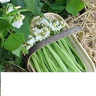 月光の白い開花ランナーの豆の種Ap 40の潜在的な自己受粉