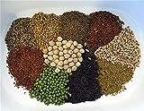 Leguana Handels GmbH Bio Keimsprossen in Geschenkbox, 10 Sorten - perfekt für die Küche oder...
