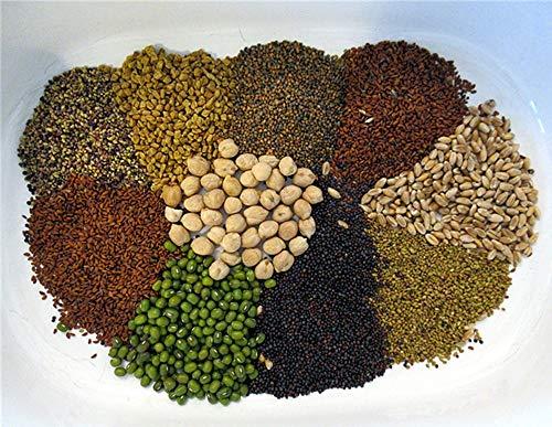 Leguana Handels GmbH Bio Keimsprossen in Geschenkbox, 8 Sorten - perfekt für die Küche oder Präsent