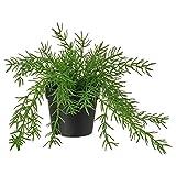 Fejka Künstliche Topfpflanze, Dekoration für drinnen und draußen, Mistelzweig-Kaktus, 9 cm
