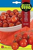 Semillas Fitó 6236 - Semillas Tomate Red Cherry