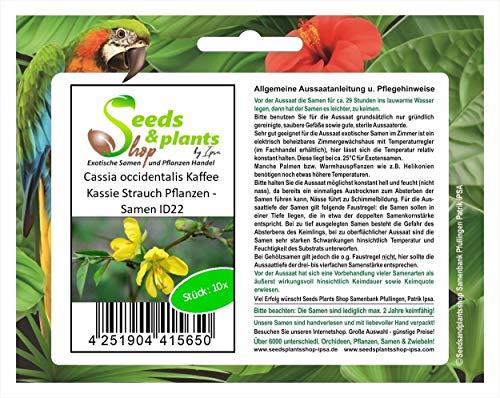 Stk - 10x Cassia occidentalis Kaffee Kassie Strauch Pflanzen - Samen ID22 - Seeds Plants Shop Samenbank Pfullingen Patrik Ipsa