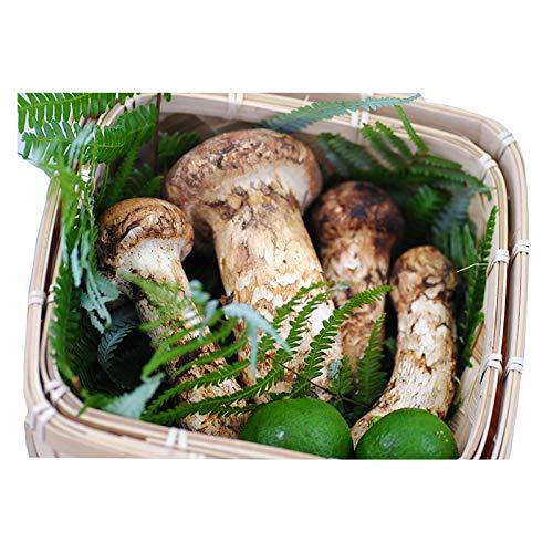 国産 松茸 中つぼみ(半開き) 小さめ 約230g 2〜8本程度入