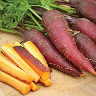 Cosmic Purple Carrot Seeds, 500+ Premium Heirloom Seeds!, Delicious! Rare! Low Availability, High Demand!, (Isla's Garden Seeds), 85% Germination Rates, Non GMO, Highest Quality Seeds