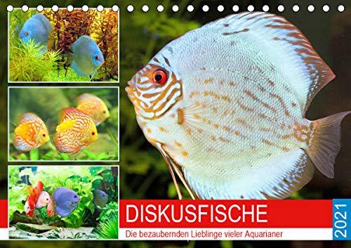 Diskusfische. Die bezaubernden Lieblinge vieler Aquarianer (Tischkalender 2021 DIN A5 quer)