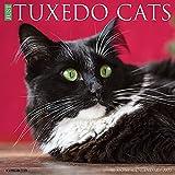 Just Tuxedo Cats 2022 Wall Calendar (Cat Breed)
