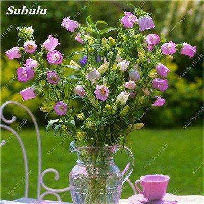 200 Pcs/Sac, Campanula Graines, graines en pot, semences Bonsai Fleur, purifient l'air, la plantation est simple, le taux bourgeonnant 95% 10