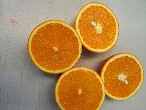 Bonsai Lemon Tree Seed 50 Pcs/paquet Citrus limon Graines Fruit Jardin Terrasse verger à graines Ferme Citron Potted semences pour jardin 3