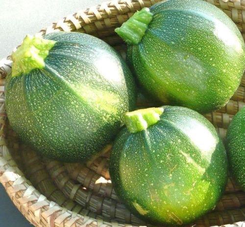 Courgette ronde d'été Squash, 25 graines