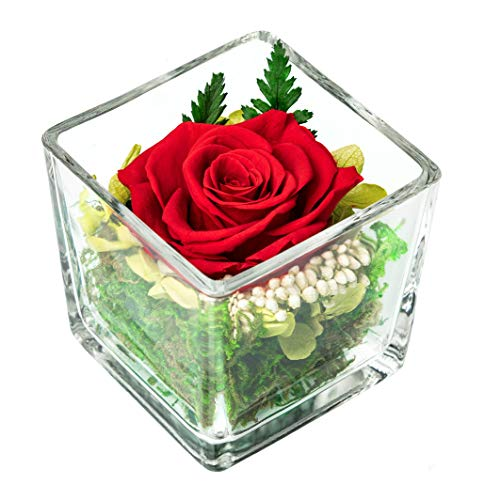 Infinity Rose im Glas; Konserviert und über 3 Jahre haltbar, ewige Pflanzen in Würfel Vase Inkl. Geschenkbox; Tischdeko Blumen; Rosenkopf Gesteck für Hochzeit, Zuhause oder als Geschenk