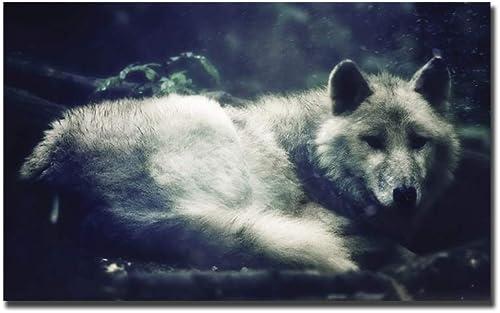 comprar ahora HPCAGLL 5D DIY Diamond Painting Set Set Set Wolf, blanco Wolf, Bestia, Punto de Cruz Animal Art Deco 210x105cm  mejor opcion