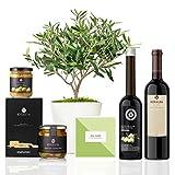 Lote Gourmet Regalo Atenea con árbol olivo prebonsai 38 cm maceta de 16 cm diámetro, guía de cuidados, AOVE, crema de aceitunas, regañás, aceitunas y vino tinto ecológico entregado en caja de regalo