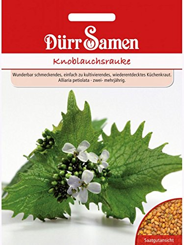Knoblauchsrauke, Knoblauchrauke, Knoblauchskraut, Knoblauchhederich, Alliaria petiolata, ca. 100 Samen