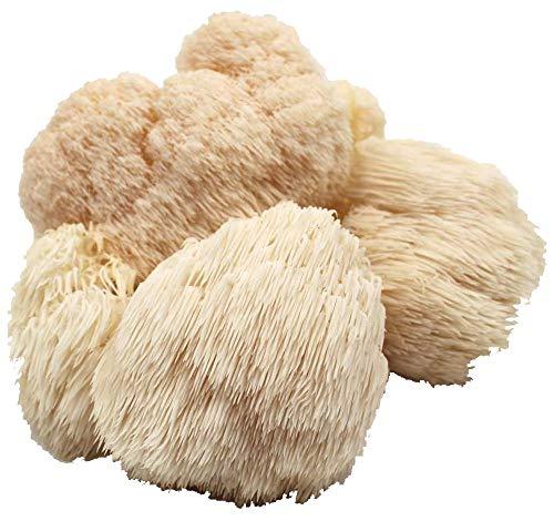 Pom Pom Ernteballen- fertige Pilzzuchtkultur in Bio Qualität