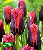 BALDUR-Garten Tulpe Slawa 10 Zwiebeln Tulipa -