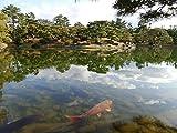 Rompecabezas Puzzle De 1000 Piezas Jardín Japonés En Takamatsu Japón Arte De Bricolaje para Adultos Mayores