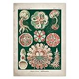 Misszhang Póster Vintage Medusas Corales Algas Verdes Anémonas De Mar Chorros Estrella De Mar Pared Arte Lienzo Pintura Póster E Impresión Sin Marco S2235 40X60Cm