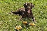 Hundespielzeug Quietsch-Leberkäs-Semmel zum Quietschen und Spielen - 8