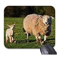 春の子羊は、トレンディなオフィスのデスクトップアクセサリーにパッドを入れます