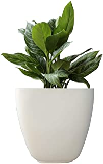 Foliage Society BS Planters (32 Inches) (White)