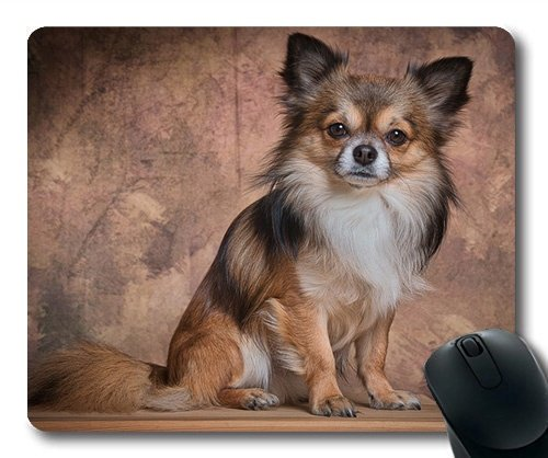 Individuelle Mousepad, Süßer Hund, Hund, Niedliches Tier Chihuahua säugetiere Fell, Hunde Gaming Mouse Pad