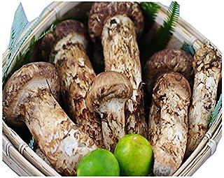 国産 松茸 中つぼみ(半開き) 1kg前後