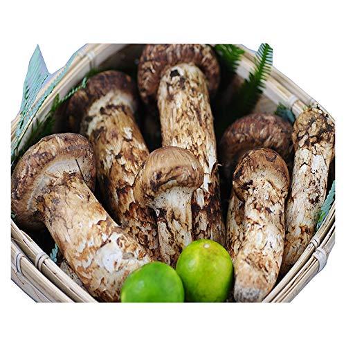 国産 松茸 中つぼみ(半開き) 約700g 3〜10本程度入 まつたけ マツタケ 岡山 ギフト 利平栗1kgオマケ付き