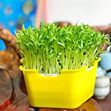 RecoverLOVE Garden Seed Sprouter Tray, Healthy Wheatgrass Grower with Lid Sprout Kit, para Little Seeds Sprouts Bean Grower Sprout Kit7.8 x 7.4 x4.3 (LxWxH)