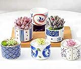 CherryTreeHouse Set di 6 mini vasi per piante grasse, cactus, erbe o aloe, decorazione per casa, ufficio, tavolo, ottima idea regalo per il compleanno