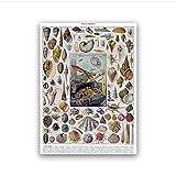 ZGHDHR Cuadro de conchas marinas Diccionario francés Cuadro de póster Ocean Life Impresión de lienzo Pintura natural Vintage Decoración de arte de oficina -60x80 Cm Sin marco