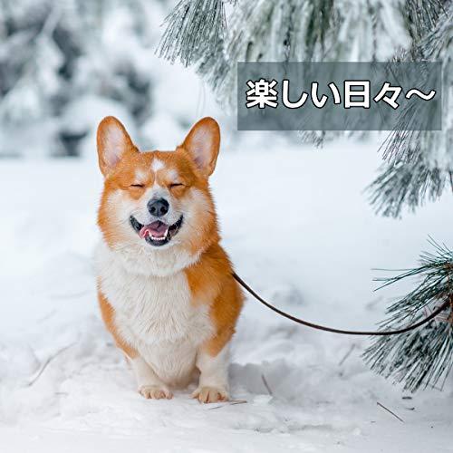 OTOKU『ペットレインコート』