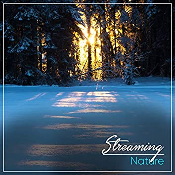 Streaming Nature, Vol. 8