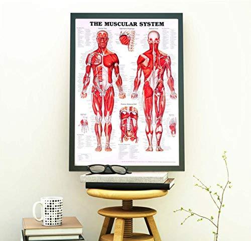 SHDJYR Menschliche Muskelplakate und Drucke dekorative Malerei Leinwand Wohnzimmer Wohnkultur rahmenlose Malerei 30x50cmx3 kein Rahmen
