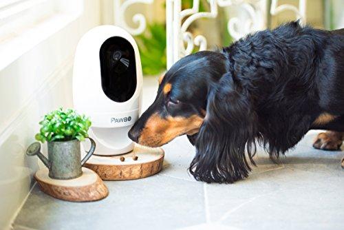 pawbo Wi-Fi cámara