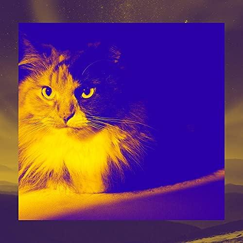 猫のための音楽 プレイリスト