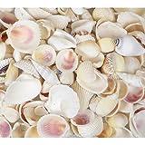 Mélange de 200 g de coquillages blancs contenant des palourdes, des conques, des cérithes (glaçons blancs) - Coquillages de plage de 2 cm à 5 cm pour mariage à la plage