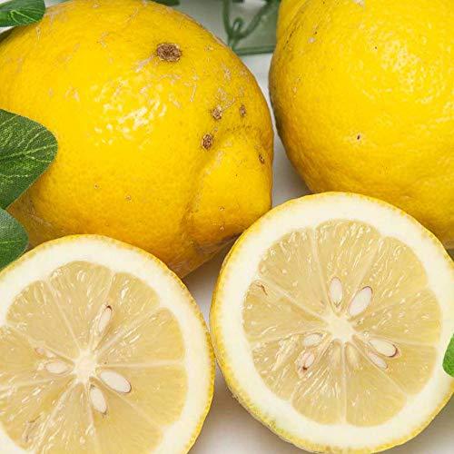 【A・B品混合】リスボンレモン 10kg 有機JAS (広島県 瀬戸内海の恵み普及会) 産地直送 ふるさと21